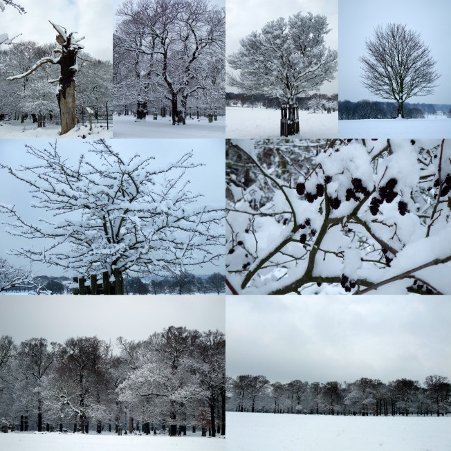 snow-in-the-park