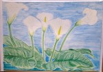 06.06.11 - Lillies - Watercolour pencils and pastels on paper A3