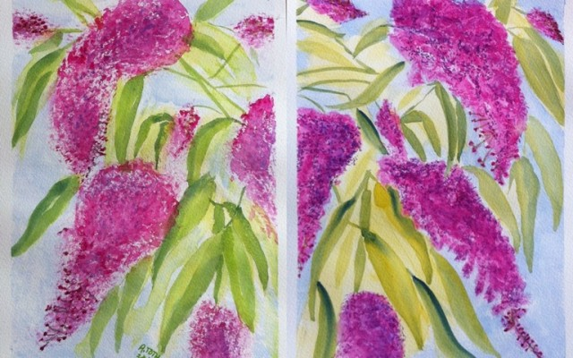Buddleias on Bockingford Paper - A4