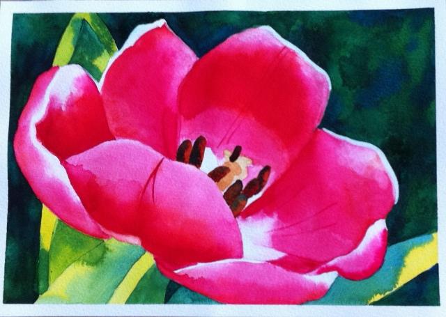 Tulip - A4 - Watercolor on Bockingford